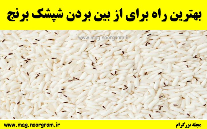 بهترین راه برای از بین بردن شپشک برنج