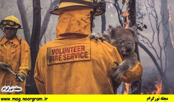 نجات حیوانات توسط آتش نشان های استرالیا