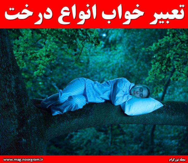 تعبیر خواب انواع درخت ( منابع معتبر )