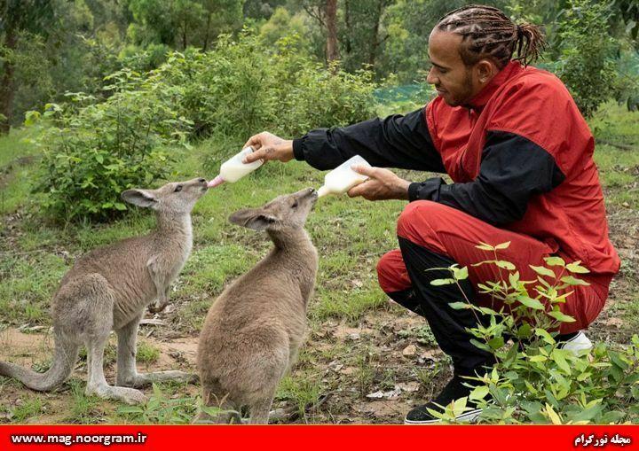 گیاه خواری و حمایت حیوانات