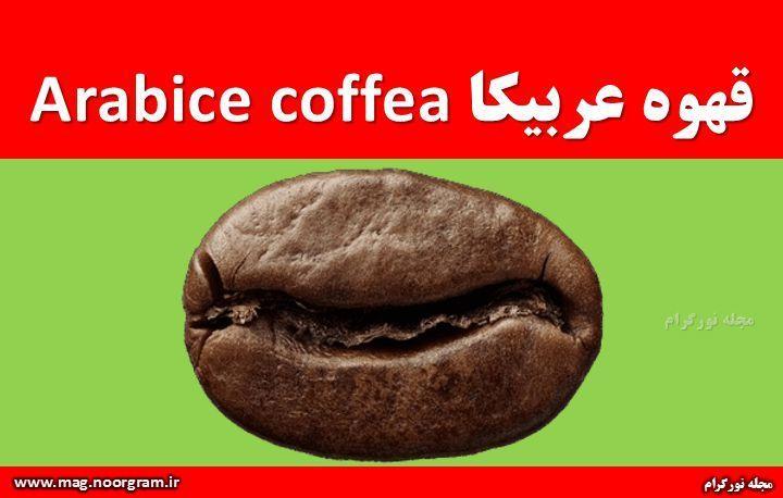 قهوه عربیکا Arabice coffea