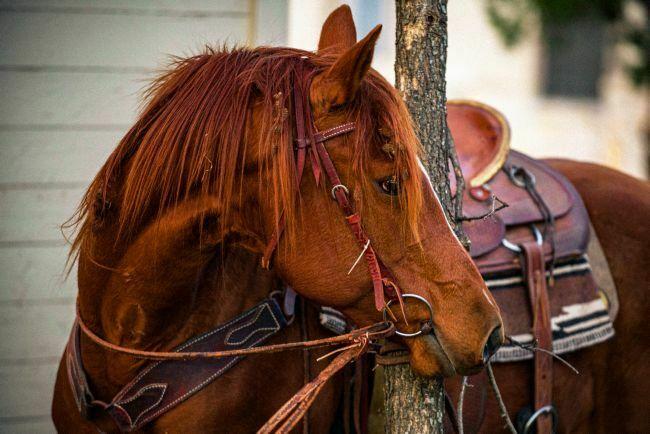 تصویر زمینه اسب